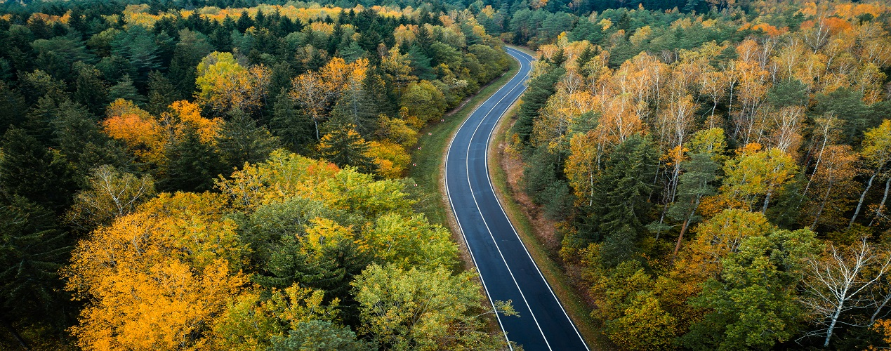 Aerial,View,Of,A,Black,Narrow,Road.,Autumn,Forest,With